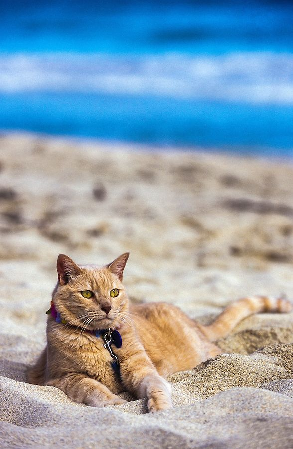 Beach Cat  =^.^=