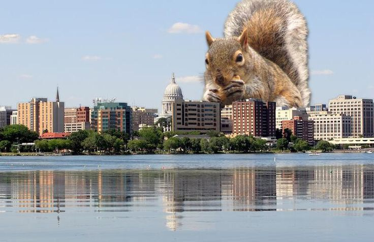 KleppinInWisco on Places in america, Madison wisconsin