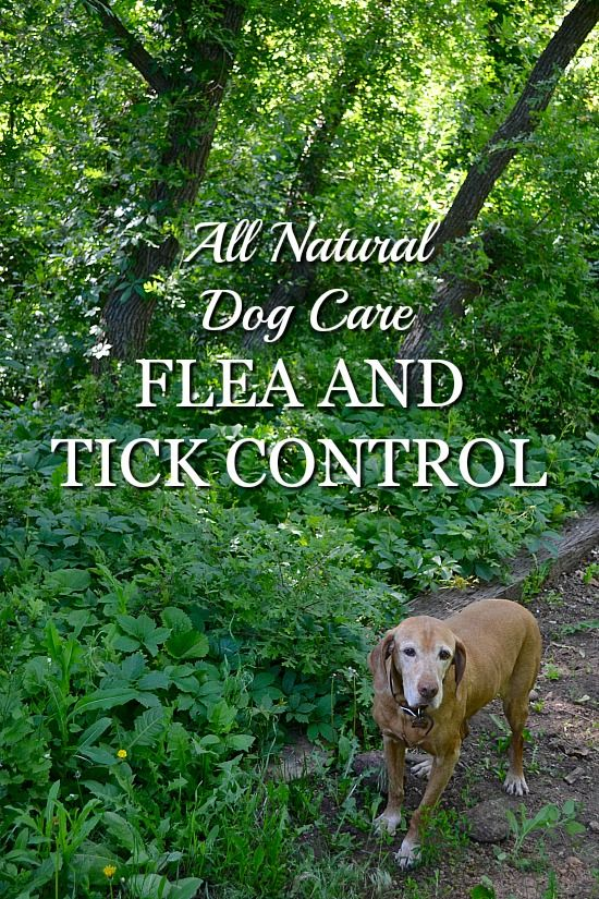 All natural dog care flea and tick control using essential oils that are safe for pets.