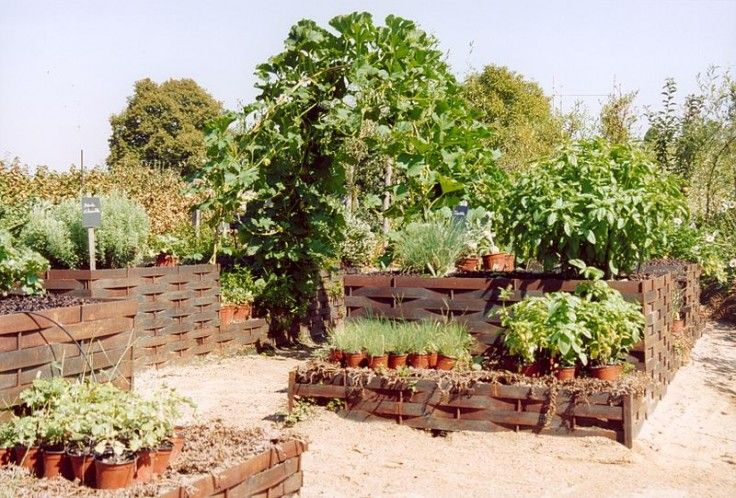 potager synergique
