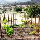Guadalupe Valley Wine Route Tour in Baja - Ensenada | Viator
