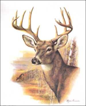 Fall Splendor Buck Deer Print Size 8x10 8-8101