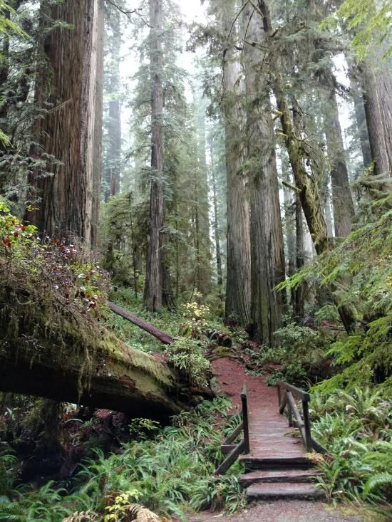 "Enter the ""Ewok Forest""! - Review of Jedediah Smith Redwoods State Park, Crescent City, CA - TripAdvisor"