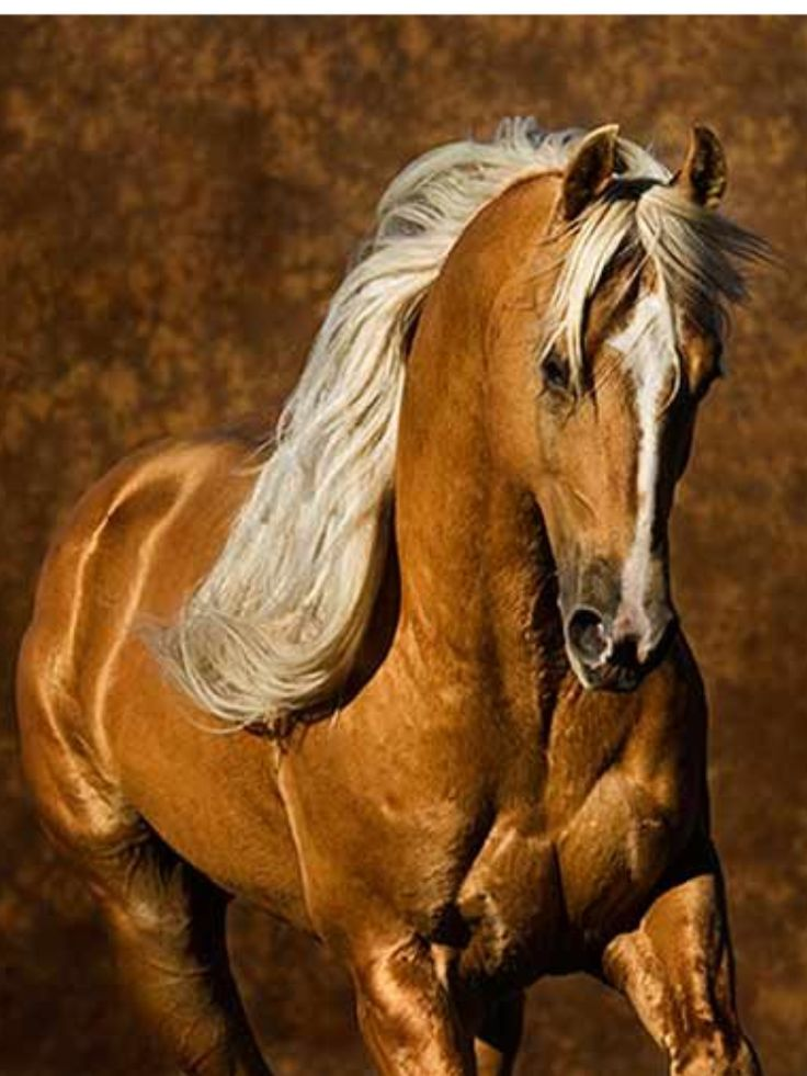 I want a dark palomino mare one day so I can name her Marmalade :3