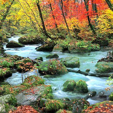 日本の四季折々の美しさを堪能できる場所が青森にあります。十和田湖の近くにある「奥入瀬」は十和田八幡平国立公園にも指定されているほど、美しい自然を見ることができるんです。奥入瀬の魅力や、奥入瀬のオススメのスポットをご紹介します。