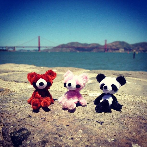 Pipe cleaner animals in Golden Gate Bridge, San Francisco http://delphynium.com/?s=pipe+cleaner