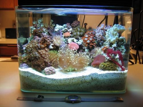 Pico Aquarium, A reef in a 3 gal tank. WOW