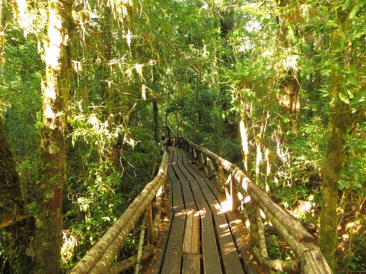 Sendero de Los Espíritus, Reserva Biológica Huilo Huilo, Neltume, Región de Los Ríos. Foto de Cristián Muñoz Álvarez.