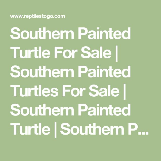 Southern Painted Turtle For Sale | Southern Painted Turtles For Sale | Southern Painted Turtle | Southern Painted Turtles