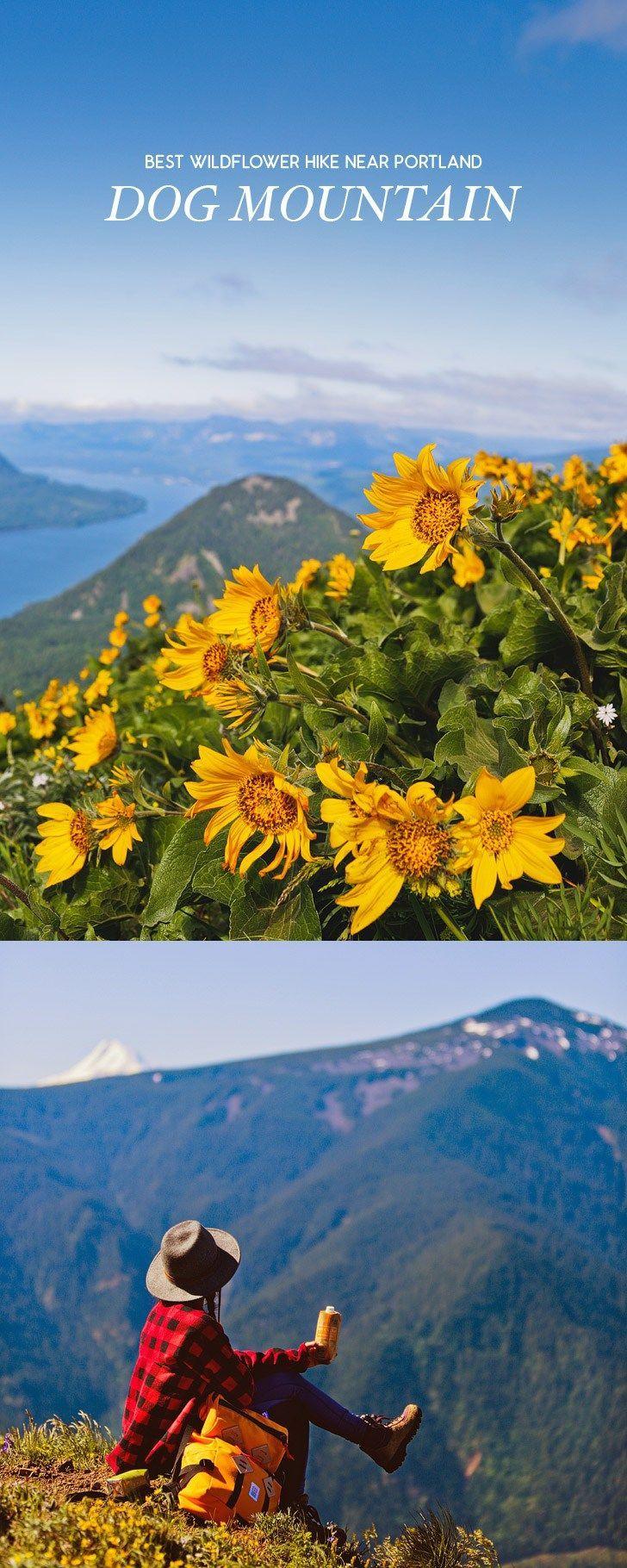 The Best Wildflower Hike Near Portland - Dog Mountain Trail, Columbia River Gorge, Washington // localadventurer.com