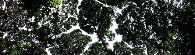 Studie: Tropische regenwouden groeien sneller door toename in CO2-uitstoot - http://www.ninefornews.nl/studie-tropische-regenwouden-groeien-sneller-door-toename-co2-uitstoot/