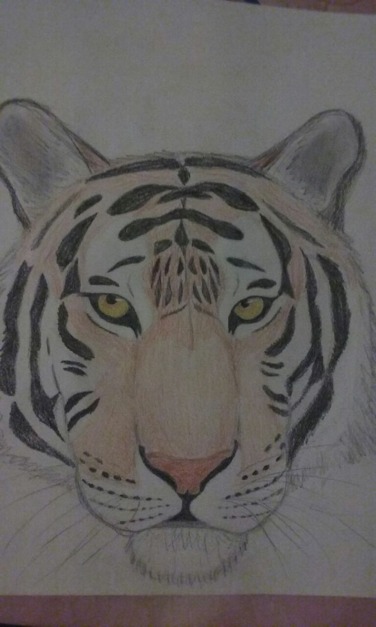 My drawing... a tiger:D