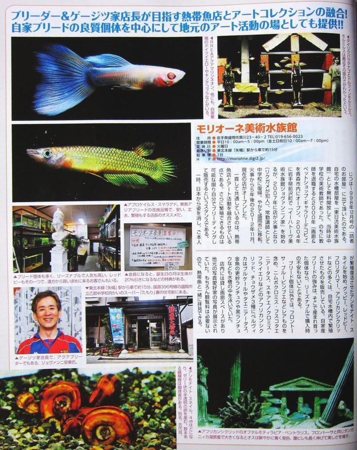 楽しい熱帯魚2013盛岡店掲載・モリオーネ美術水族館