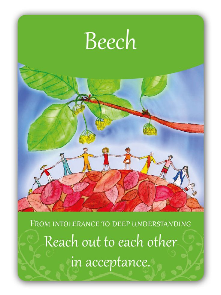 Beech - Bach Flower Oracle Card by  Susanne Winberg. Message: From intolerance to deep understanding.