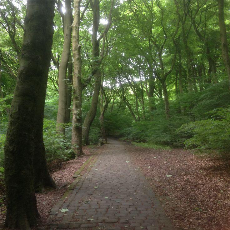 Parkwood Woods, between Long Lee & Parwood Street, Keighley, August 2016