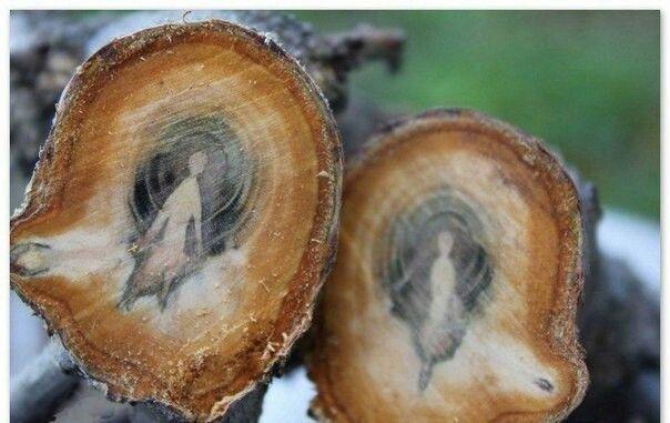 Рисунок на спиле дерева