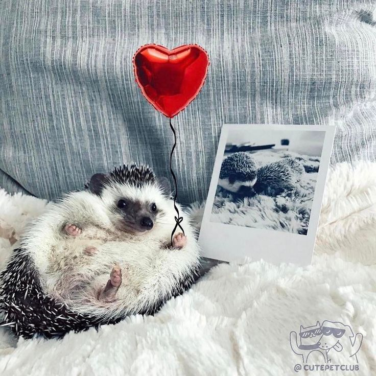 From @M R.pokee: Be my long distance Valentine?  #missyou#valentinesday #cutepetclub [source: www.instagram.com/p/BQhJNnBFwnt/ ]