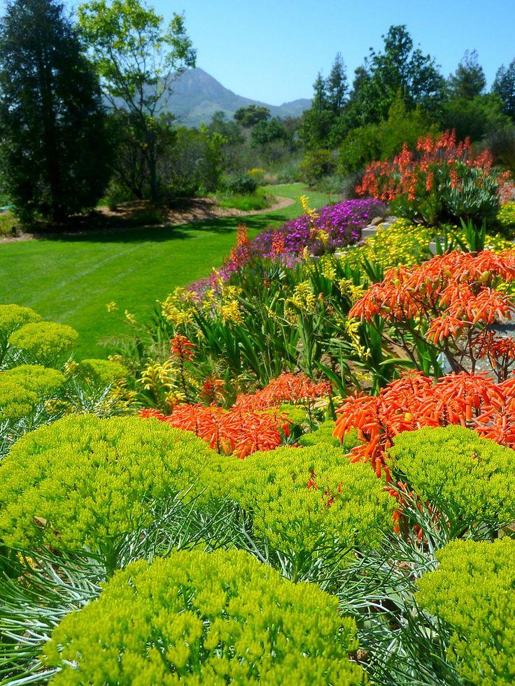 https://flic.kr/p/mtwWXY | South African Garden, Leaning Pine Arboretum, Cal…
