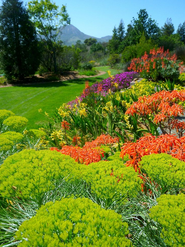 17 best images about fynbos garden on pinterest gardens for Garden designs in south africa
