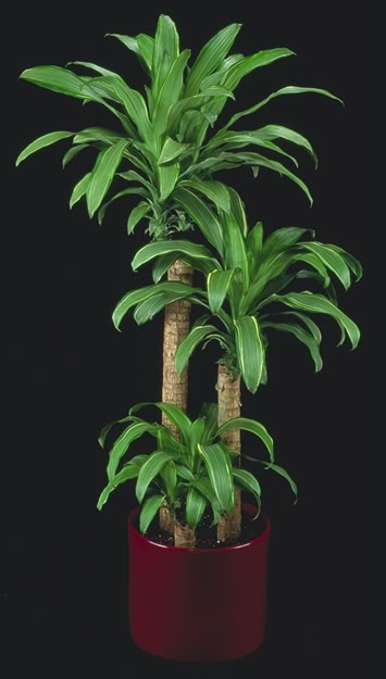 36 best showroom plants images on pinterest green plants for Low water indoor plants