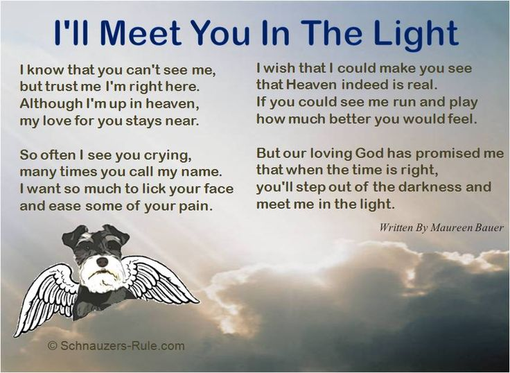 "Pet Loss Poem ""I'll Meet You In The Light""  Written by Maureen Bauer. In Loving Memory of D'Arcy."