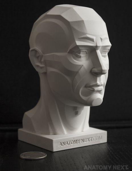 Анатомия Следующий магазин - MALE ТОпОграфия ГОЛОВА 3D модель PRINT