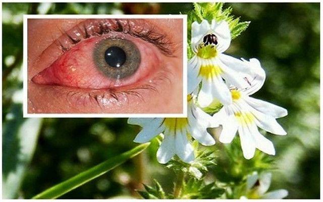 Βότανο Βελτιώνει την Όραση ακόμα