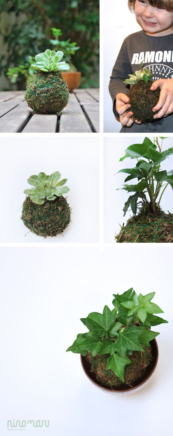 Tutorial DIY Kokedama 2/2 by ninomaru