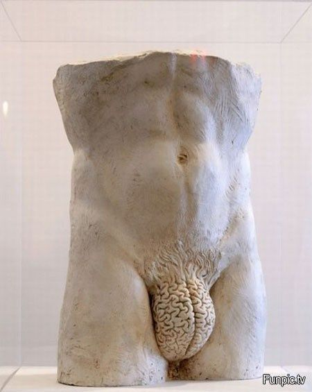 The male brain.
