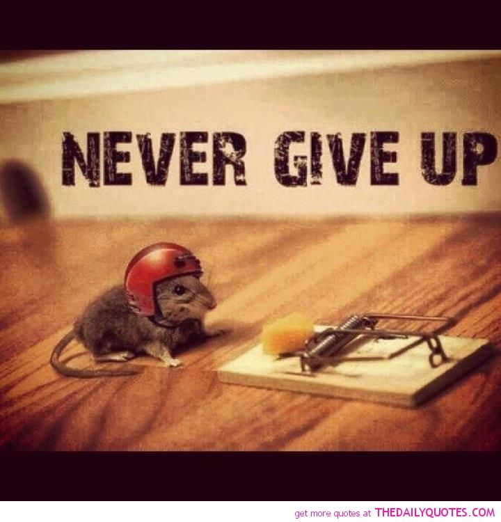 Never Give Up Quotes, Up Quotes
