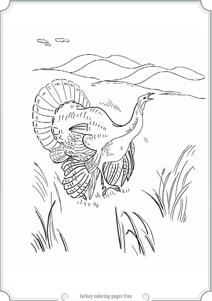 48 Best Coloring Pages Images On Pinterest