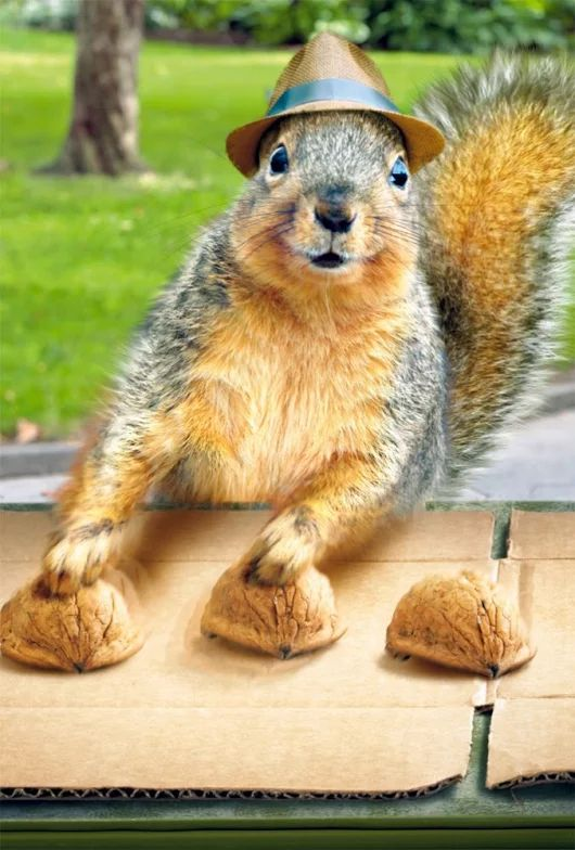 Best Squirrels They Want Us Dead Images On Pinterest - Squirrel photographed in heroic pose becomes star of hilarious photoshop battle