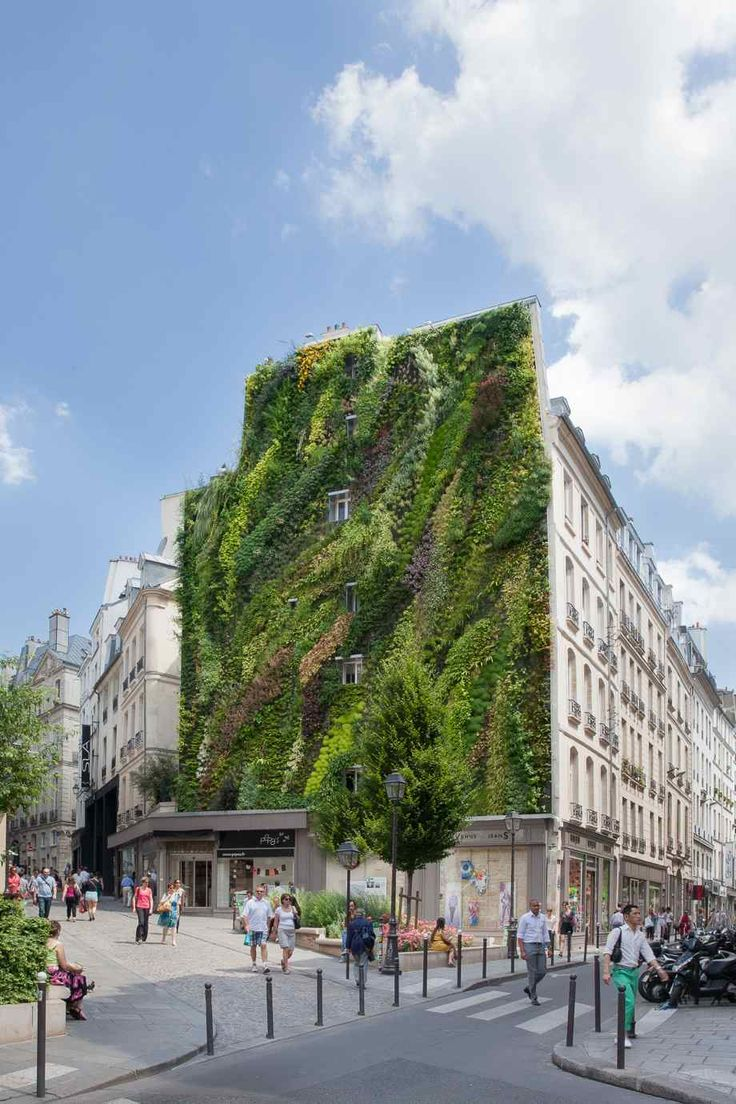 L'Oasis d'Aboukir, a new vertical garden on the side of a residential building in Paris. Photo courtesy of Yann Mone