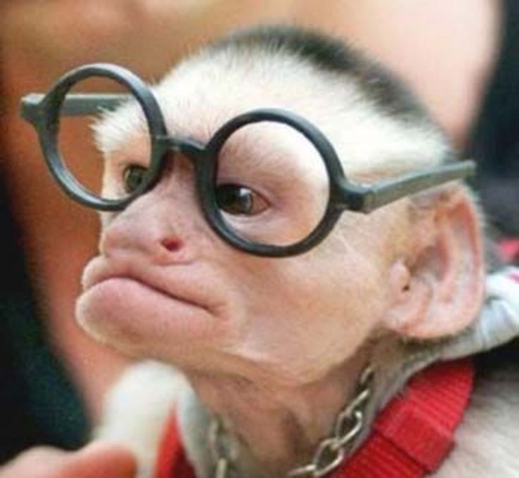 I know this is gonna sound mean...but I swear this monkey looks like Hugh Hefner!! LOL!
