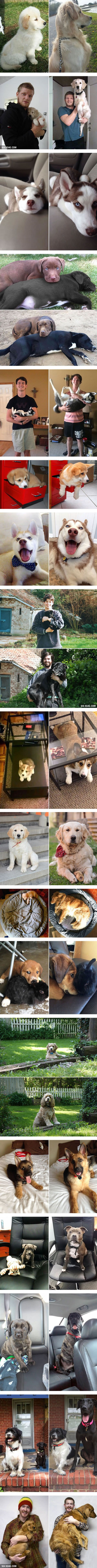 Before and After Photos of Dogs Growing Up - 9GAG