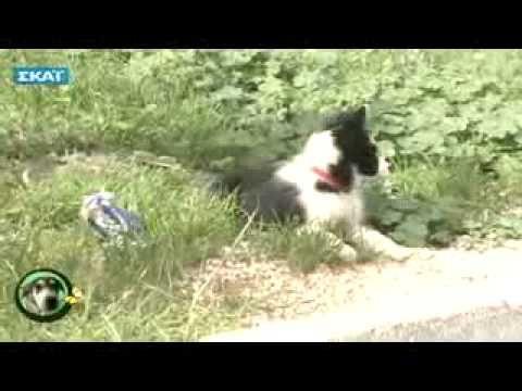 ▶ Εκπαίδευση σκύλου - 2 μηνών - YouTube