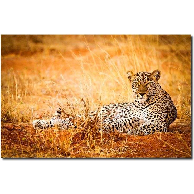 16 best Stephen W. Oachs Animal Prints images on Pinterest | Animal ...