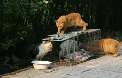 How to Make a Feral Cat Shelter for Cold Weather Areas