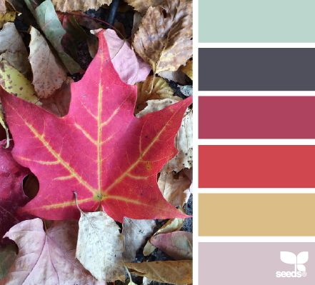 fallen hues                                                                                                                                                                                 More