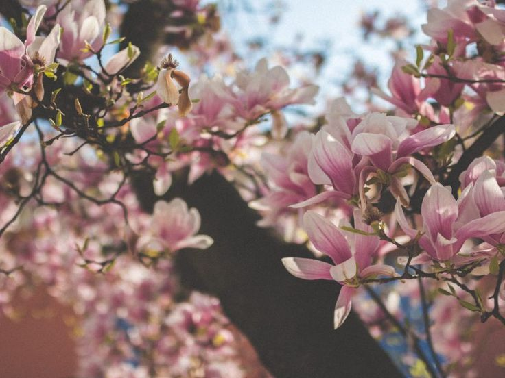 What does the Spring Equinox mean?