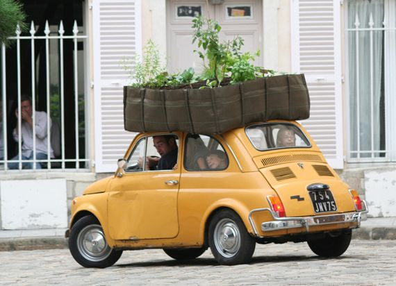 Garden on the road.Minis Gardens, Cars, Green Roof, Plants, Roof Gardens, Fiat 500, Bags, Fiat500, Mobile