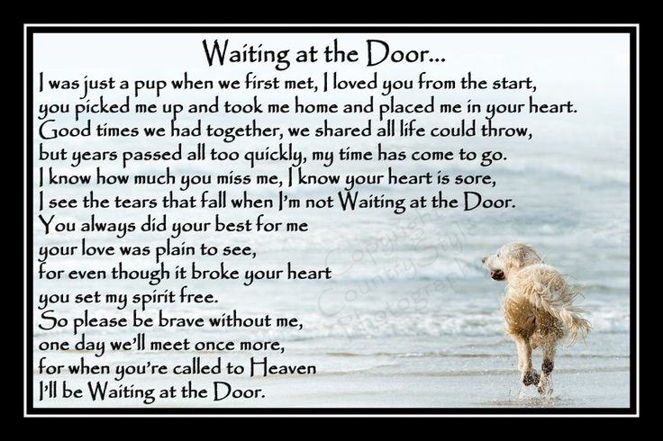 Golden Retriever Pet Dog Photo Memorial Gift Mounted Poem 9 X 6 Print Unframed In 2021 Pet Dogs Photos Dog Poems Golden Retriever