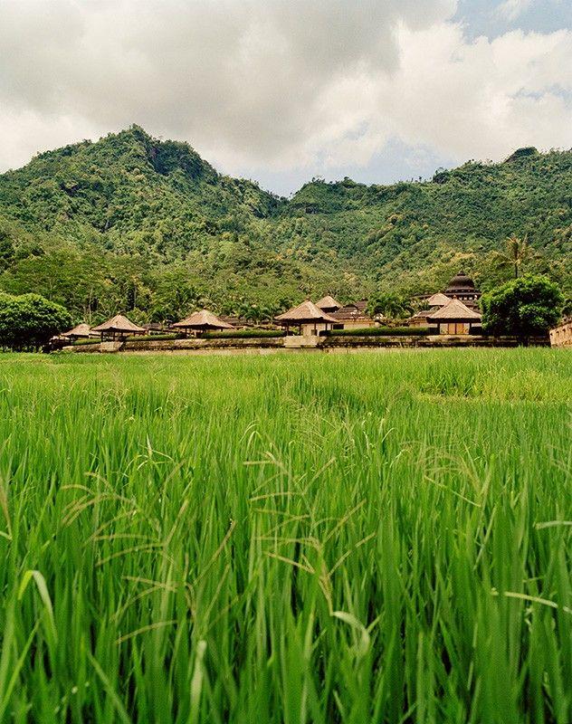 Paddy fields@Amanjiwo