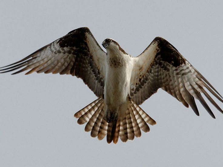 Lawalong Wildlife Sanctuaries - in Jharkhand, India