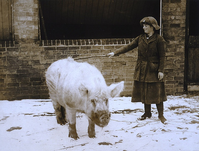 Some Pig by The National Archives UK, via Flickr
