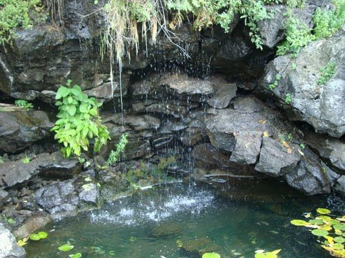 M s de 25 ideas incre bles sobre jardin botanico unam en Jardin botanico de la unam