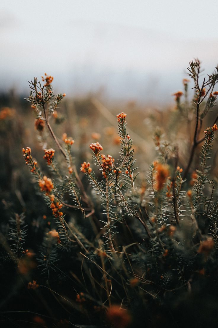 j-k-i-ng:  Wildflowers At Sunset by | Leire Unzueta – Inspiration