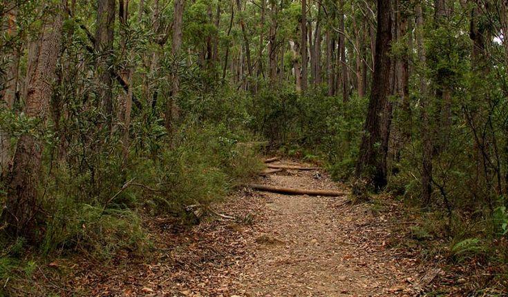 Pigeon House Didthul walking track. Photo: John Yurasek Copyright:NSW Government