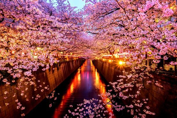 Media Preview Cherry Blossom Japan Places In Tokyo Japan