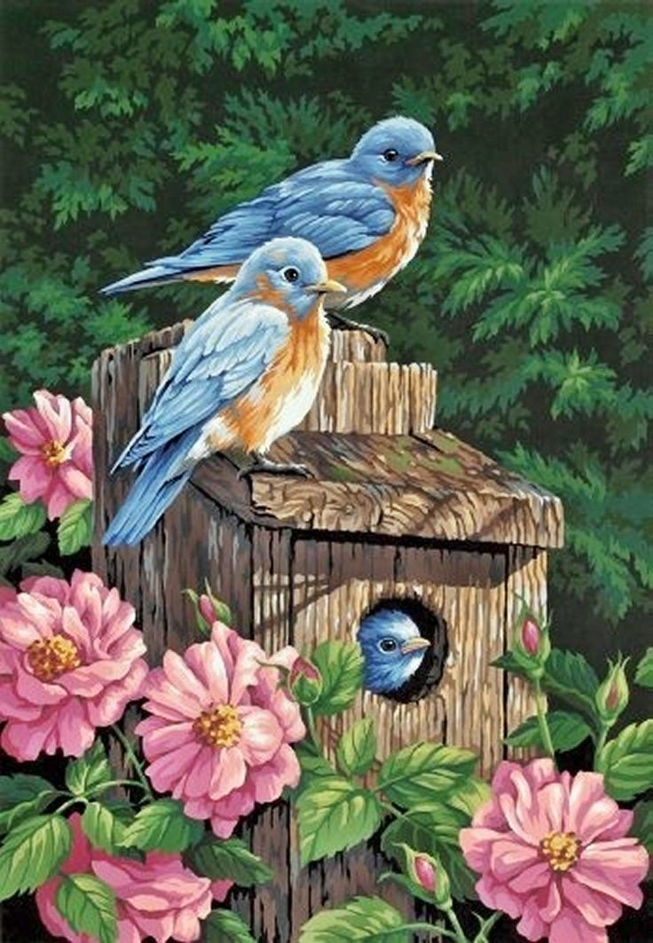 Steve had a birdhouse in our home that he hadn't yet put in the garden when he passed away. I will put it out this spring for the birds.